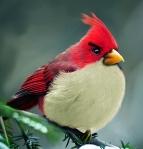 Natural Angry Bird