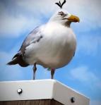 Natural Angry Bird - Egg Bomber